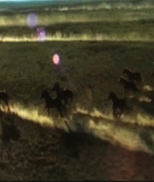 Les Mustangs